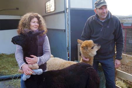 """Unsere Alpakas beim """"Markt der Erde"""""""
